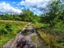 Weg im Wittmoor